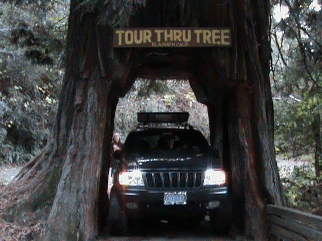 drive-thru-tree