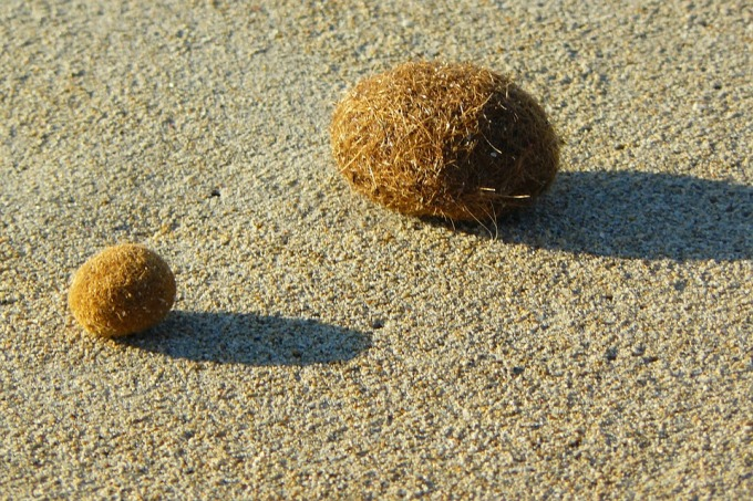 natural-beach-ball